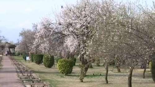 Historical Badamwari garden reopens in Srinagar to give tourism a boost