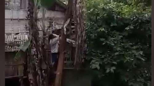 Viral Video: केले के पेड़ पर चढ़कर उसे काट रहा था शख्स, फिर हुआ कुछ ऐसा...