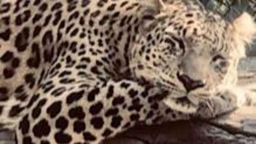 एक अप्रैल से खुलेगा दिल्ली का राष्ट्रीय प्राणी उद्यान, कोरोना महामारी की वजह से था बंद