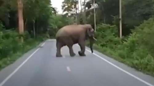 Watch: Elephant breaks into Thai kitchen looking for snacks