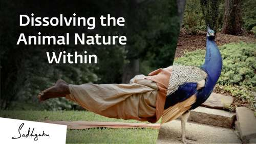 Dissolving the animal nature within