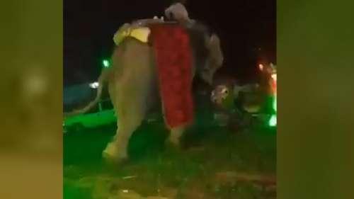 ब्याह में गुस्साए हाथी ने की तोड़फोड़, डर के मारे दूल्हा भागा बग्गी छोड़