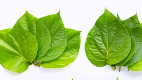 Betel leaves: why Indians chew on this leaf after a meal