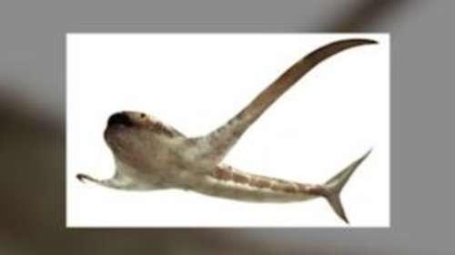 The 'eagle shark' that glided through ancient seas 93 million years ago