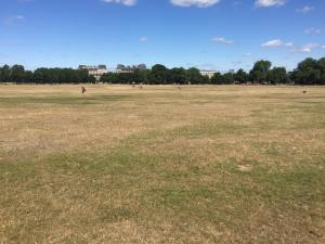Clapham Common Lax session