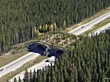 Five Crazy Bridges for Animals