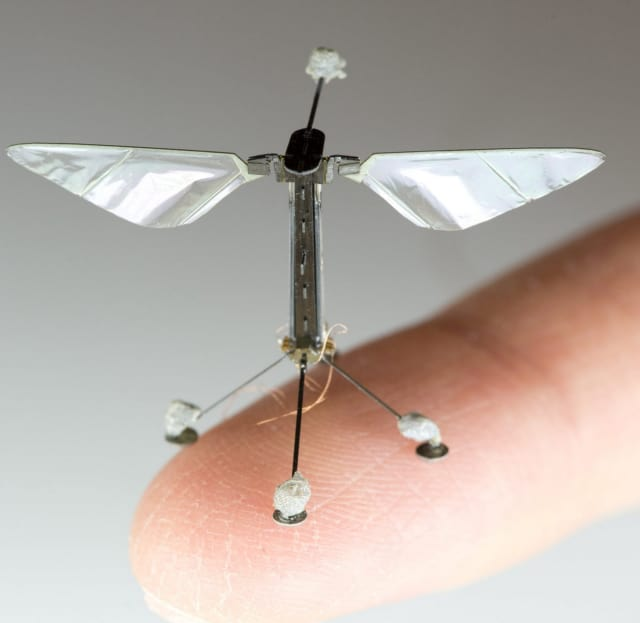 A RoboBee drone, with a wingspan of 3 cm. (Image courtesy of Wyss Institute.)