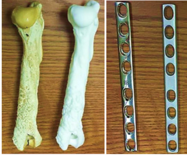 3D-printed replicas of a canine humerus bone, and a surgical metal plate. (Image courtesy of Deidre Quinn-Gorham.)