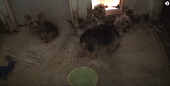 Puppy mills conditions