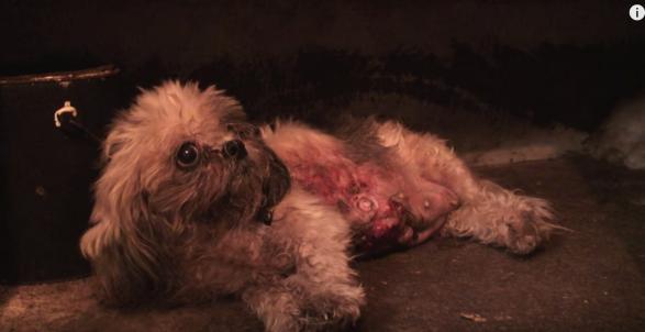 Puppy mills sickness
