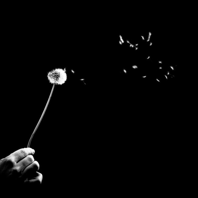 Benoit Courti, Black and White Photography, Epistrophy, dandelion blowing in the wind, hand holding it, art, portraits