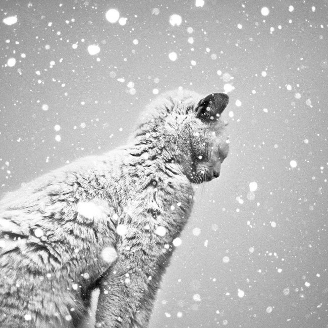 Black and White Photography, Epistrophy, white cat in the snow, art, portraits