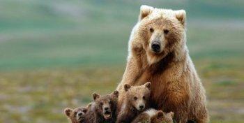 Bear_Cubs.jpg