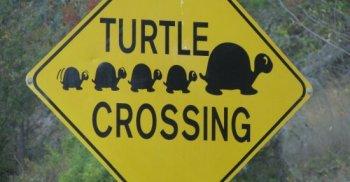 Turtle_Crossing.jpg