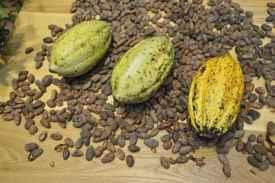 cocoa futures, trading cocoa futures, cocoa prices