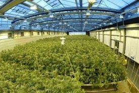 gw pharmaceutical stock price, gwph stock price, gwph marijuana stock, best marijuana stocks, legitimate marijuana stocks, safe marijuana stocks