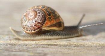 Snail_Slow.jpg