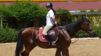 Reversal_Horse.jpg