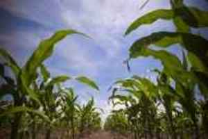green plains stock, green plains renewable energy, GPRE, corn prices, price of corn, small-cap stocks, small-cap companies