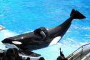 SeaWorld stock, SeaWorld stock down, Blackfish, SeaWorld profits