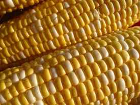 corn prices, trading corn futures, corn prices bottom,