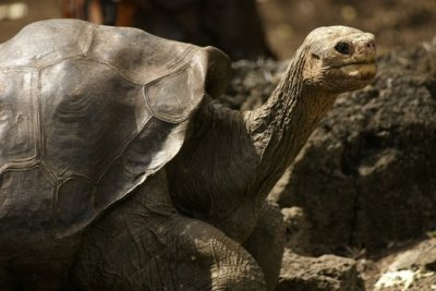 Lonesome_George.jpg
