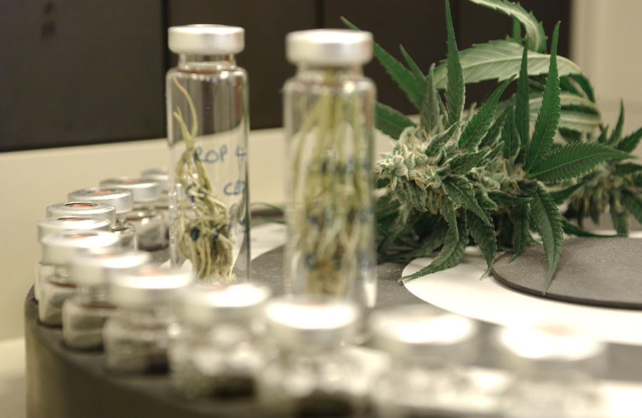 GW Pharma Lab