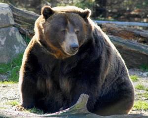 Bear Inverse ETFs