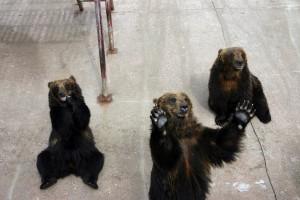 Wall Street Bears