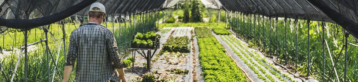 Greenhouse Photo