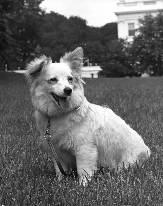 første hund på månen