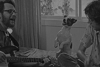 Campanha de PURINA® DOG CHOW® tem novo filme