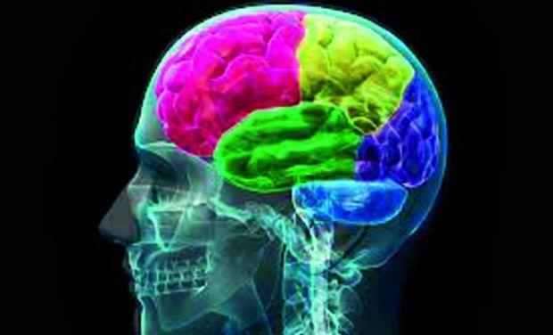 World's First 3D Digital Brain Developed in London