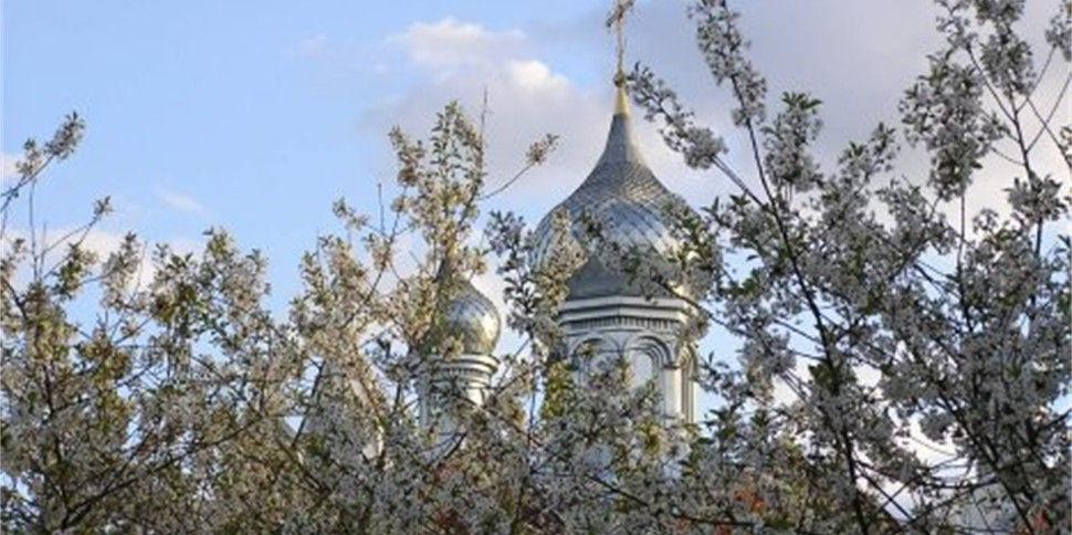 Цветущий сад на фоне куполов