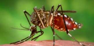 diet tips during dengue