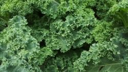 Dark Leafy Green Vegetables- HEALTHIEST WINTER FOODS