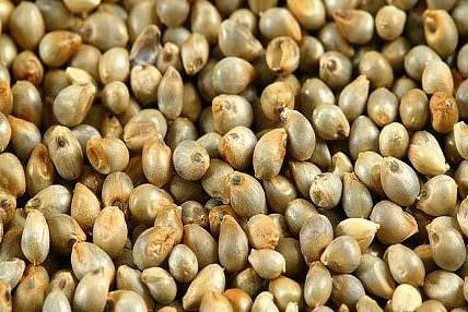 HEALTH BENEFITS OF PEARL MILLET ( Bajra )