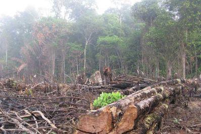 Brazil deforestation