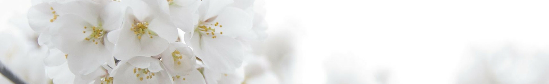 White Flower Blue Sky