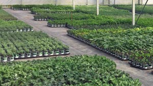 Fresh Greenhouse
