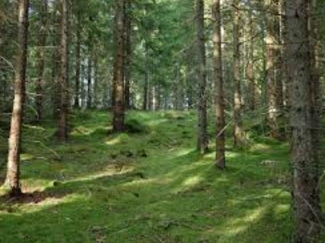 I skogen andas vi in phytoncides som stärker vårt immunförsvar.