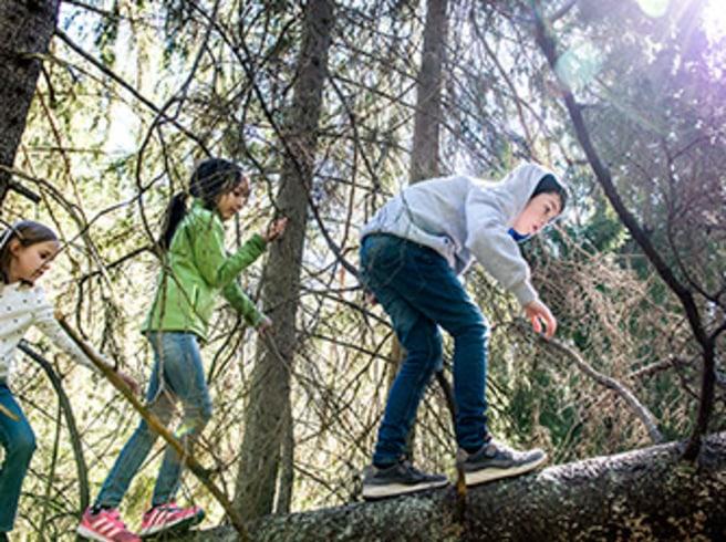 """Stadsbarn släpper loss i skogen:  """"Man är fri åt alla håll"""""""