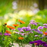 I trädgården växer känslan för livets villkor