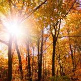 Nu är det bevisat – naturen gör dig till en godare människa | LAND.se
