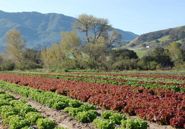 Classic Organic Farm & Market - Image 0