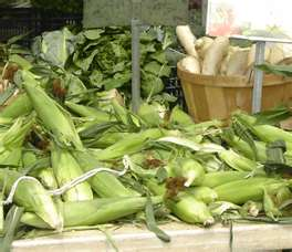 Hollisaja Farm - Sweet corn