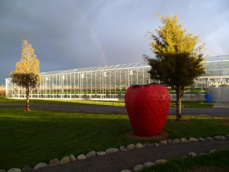 Hedgerows Hydroponic Strawberries - Kids love the huge red strawberry at the entrance to the glass house