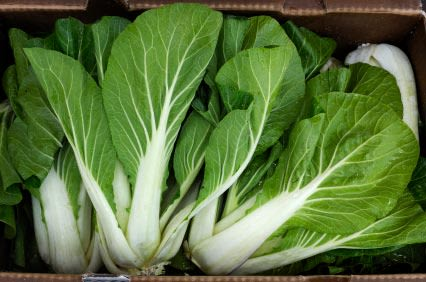 Trim Pines Farm - Bok Choy, a crunchy springtime treat