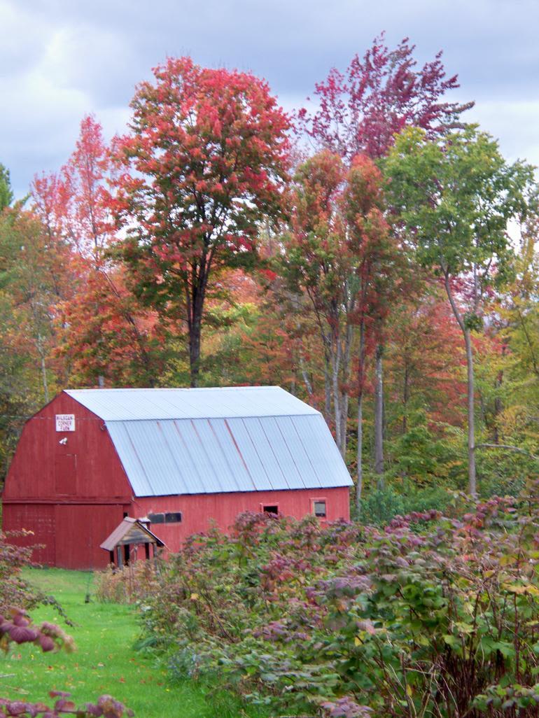 Milkcan Corner Farm - Image 2
