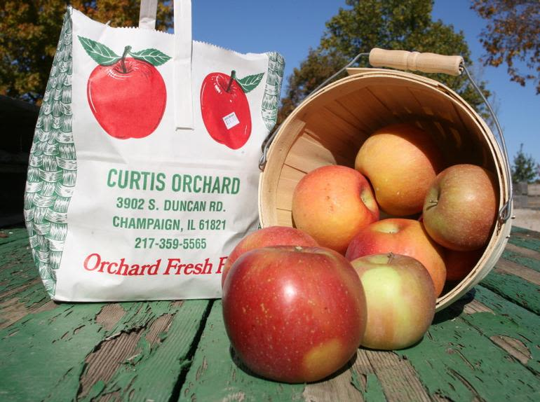 Curtis Orchard & Pumpkin Patch - Our most popular varieties are Honeycrisp, Jonathan, Gold Delicious, Gala and Fuji, but we have 25 others!  Please call ahead or check curtisorchard.com to see what's in season at the time you come.
